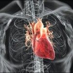 tips-for-a-healthy-heart